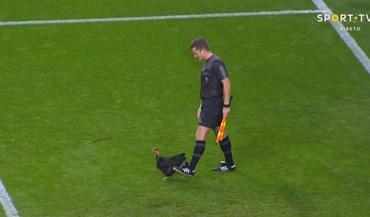 O que faz uma galinha preta na área do FC Porto?
