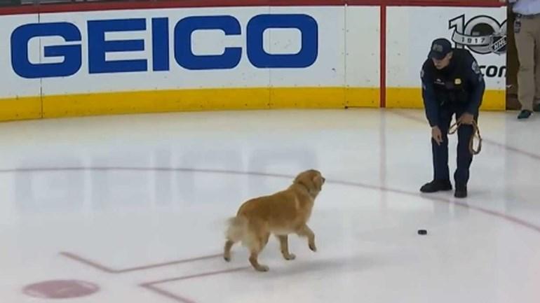 Quando um cão é figura... no hóquei no gelo