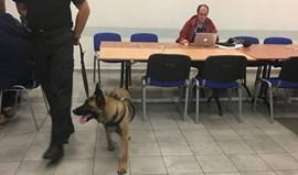 Cães garantem segurança na sala de imprensa
