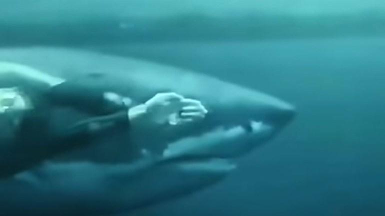 Michael Phelps contra um tubarão branco: quem vence?