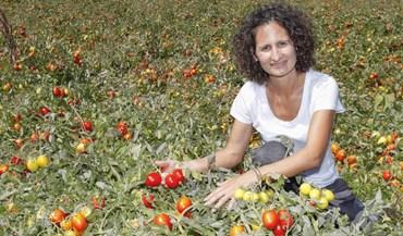 Inês Henriques: «A apanha do tomate fez-me mais forte»