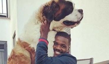 Cão de William Carvalho cresceu... e de que maneira