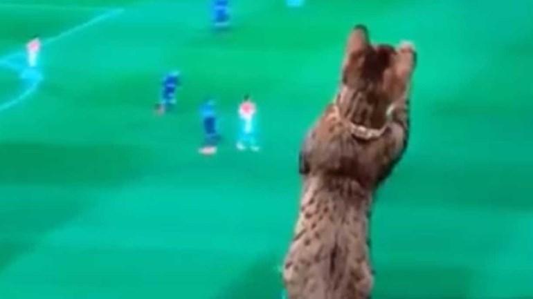Um dos espectadores mais atentos do Monaco-PSG foi... o gato de Dani Alves