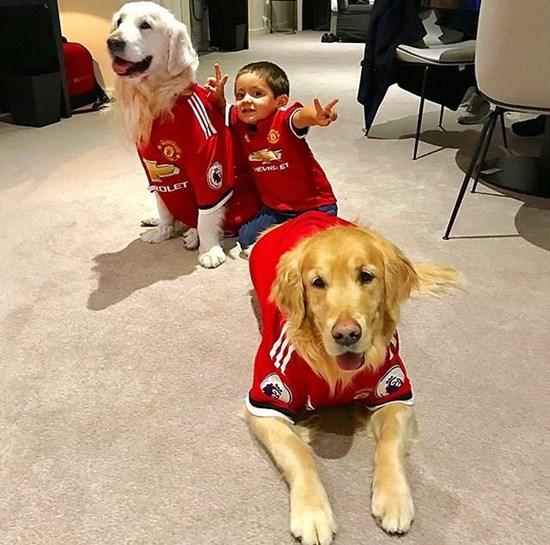 José Mourinho deixa Ibrahimovic sair do Manchester United se o sueco quiser