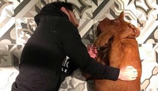 Messi voltou com Hulk: o gigantesco cão que continua a dar que falar