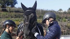 Academia João Cardiga: equitação para todos